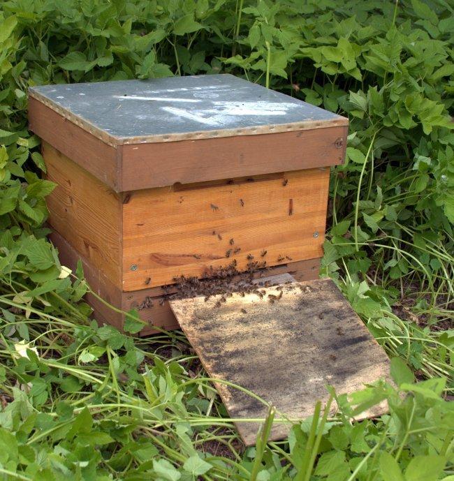 Lielākā daļa bišu sagājušas stropā