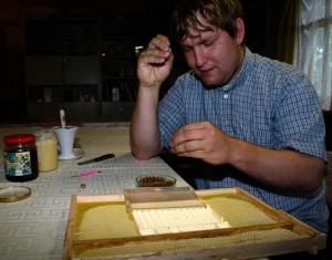 LBB speciālsts Jānis Trops pārpotē oliņas, kuras bišu māte bagātīgi sadējusi uz Nicot kāres vāka