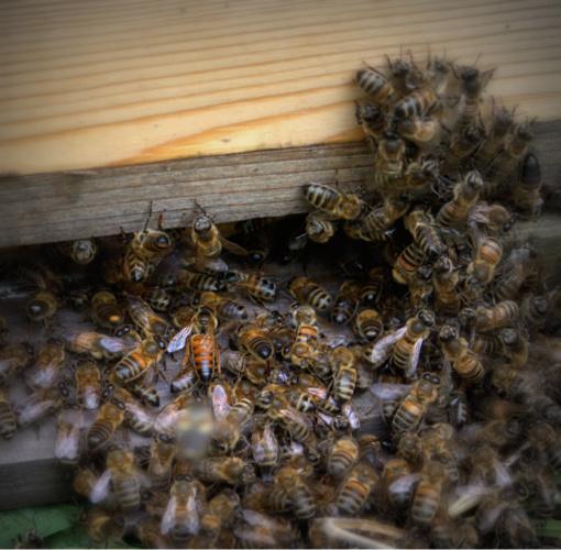 Bišu māte ieiet stropā